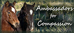 Ambassadors for Compassion