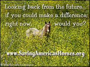 Saving America's Horses film poster ©WFLF