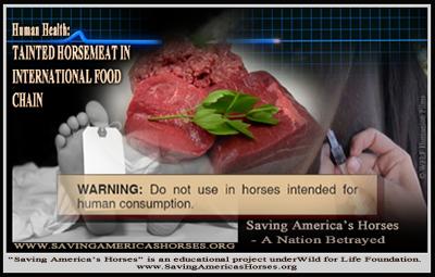 Tainted horsemeat BNR