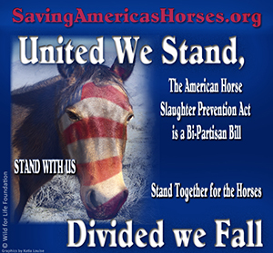 Take the Pledge to Stand United for the Horses